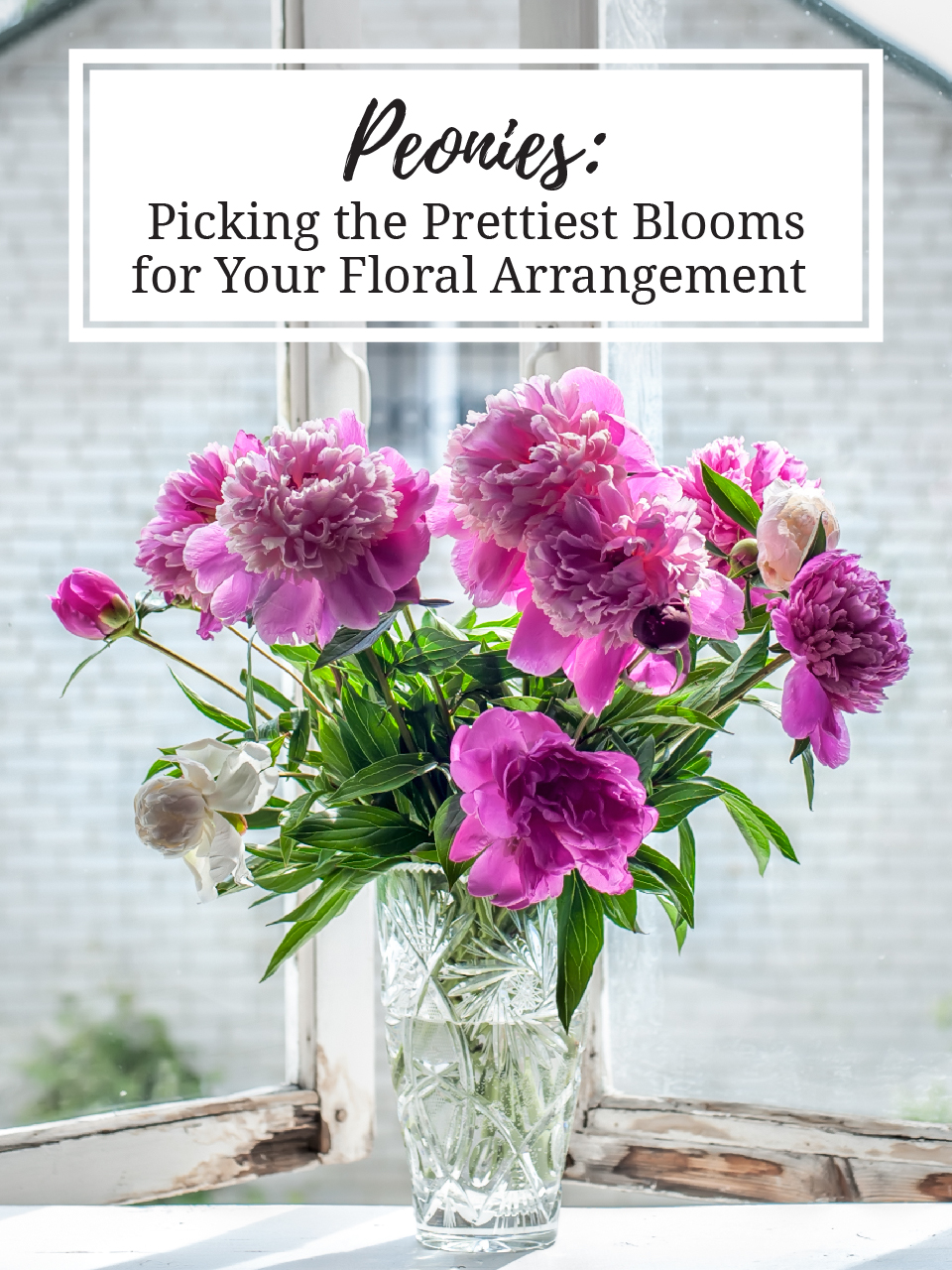 Peonies Picking The Prettiest Blooms For Your Floral Arrangement