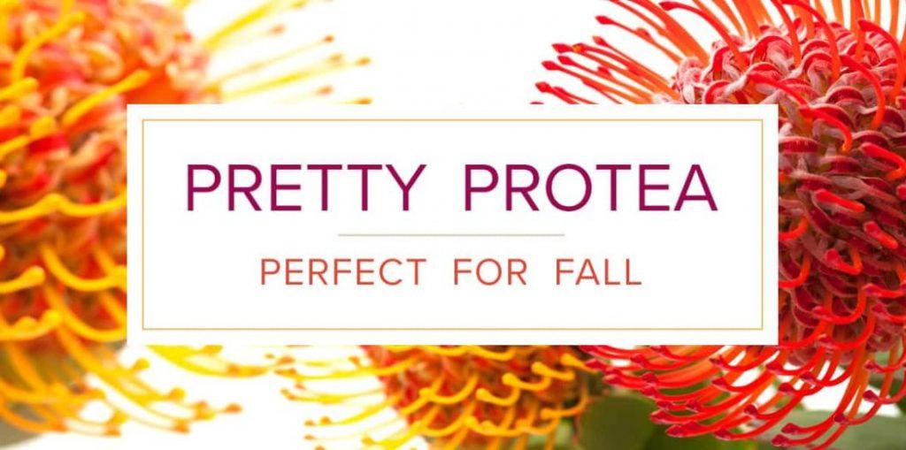 Autumn Protea Decor