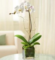 Single Orchid In Glass Cube