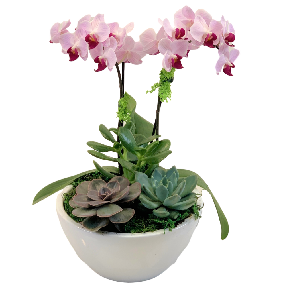 Orchid & Succulent Garden In White