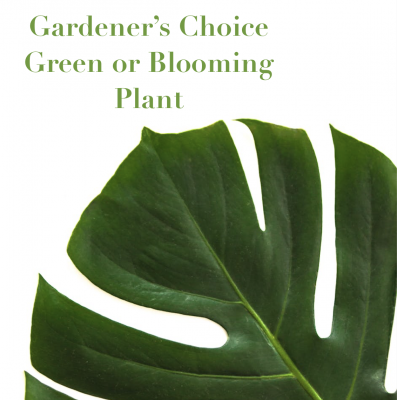 Gardener's Choice Blooming Plant