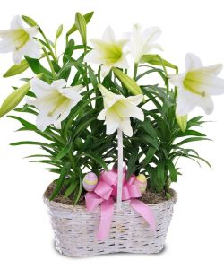 Double Lily Basket
