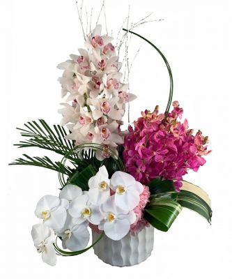Orchid Appeal